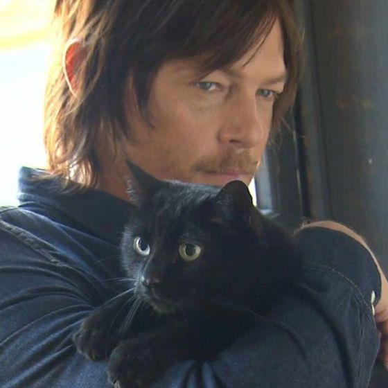ノーマンと黒猫は良く似合う